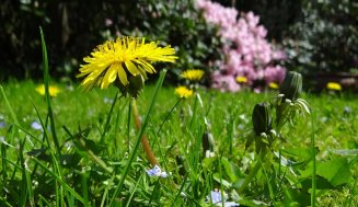 3 Tips to Increase the Best Broadleaf Weed Control Lawns