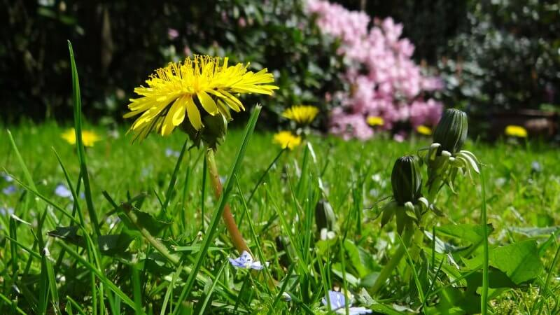 Best Broadleaf Weed Control Lawns