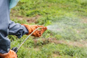 What Is The Best Weed Killer You Can Buy