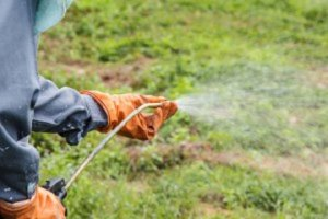 Liquids-Weed-Killer-Safe-Grass