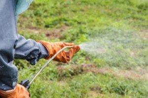 Liquids-Weed-Killer-Safe-Grass