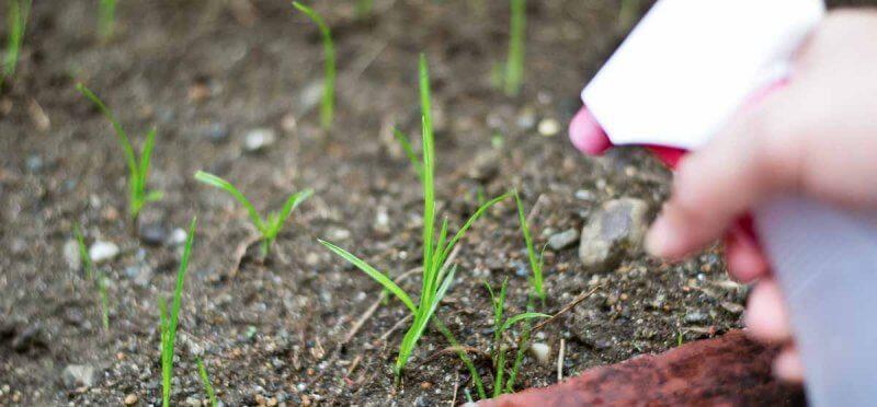Safe Herbicides lawn