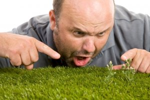 Best Weed Preventer for Lawns
